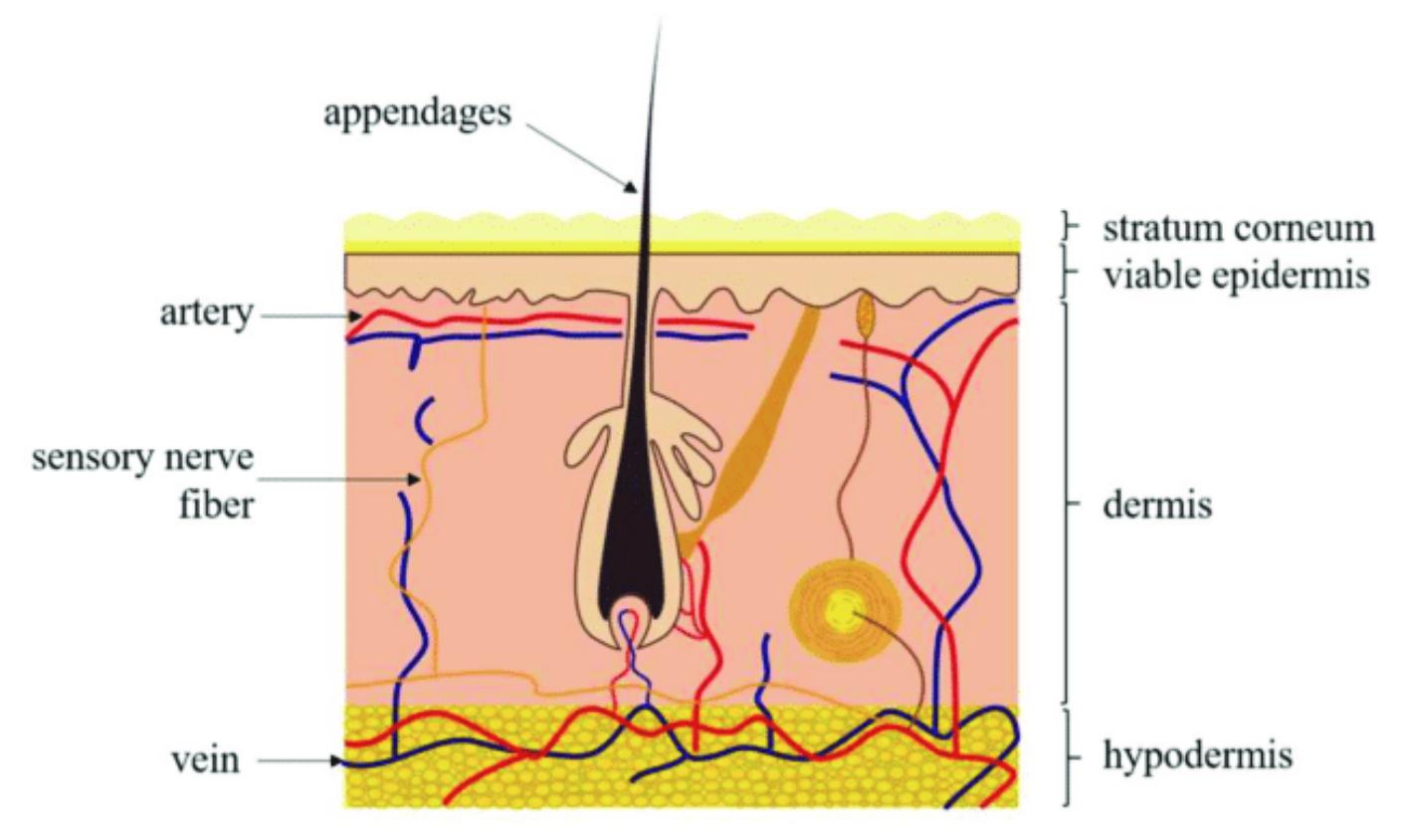 hidratanción de la piel