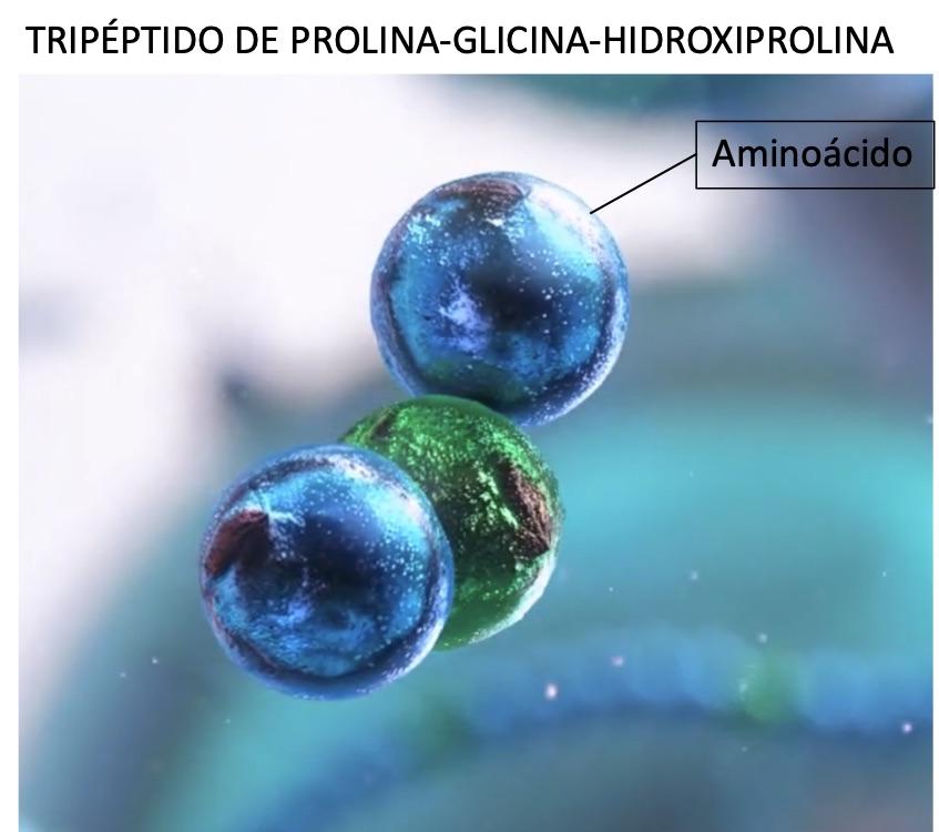 Peptido de colágeno