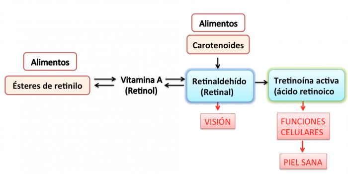 metabolismo retinoides